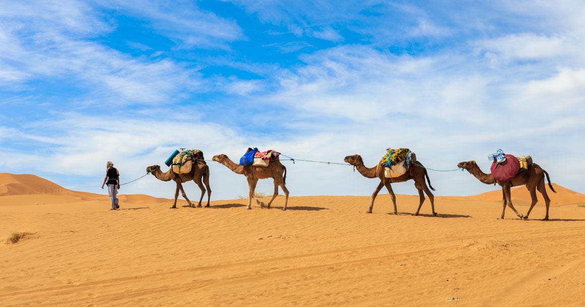 desert_safari_6