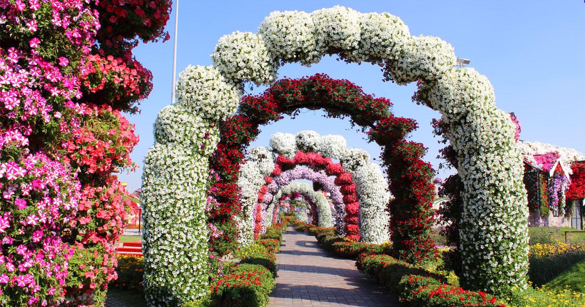 miracle_garden_3