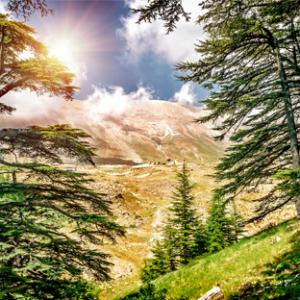 Cedars – Bcharreh – Qadisha