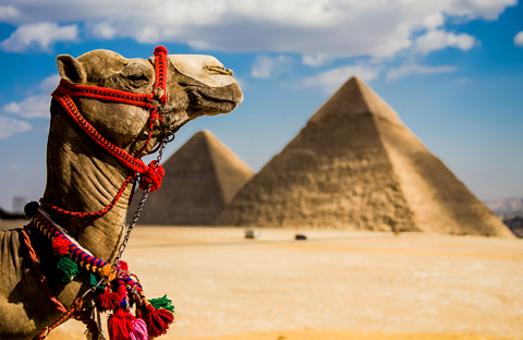 Egypt a la Carte